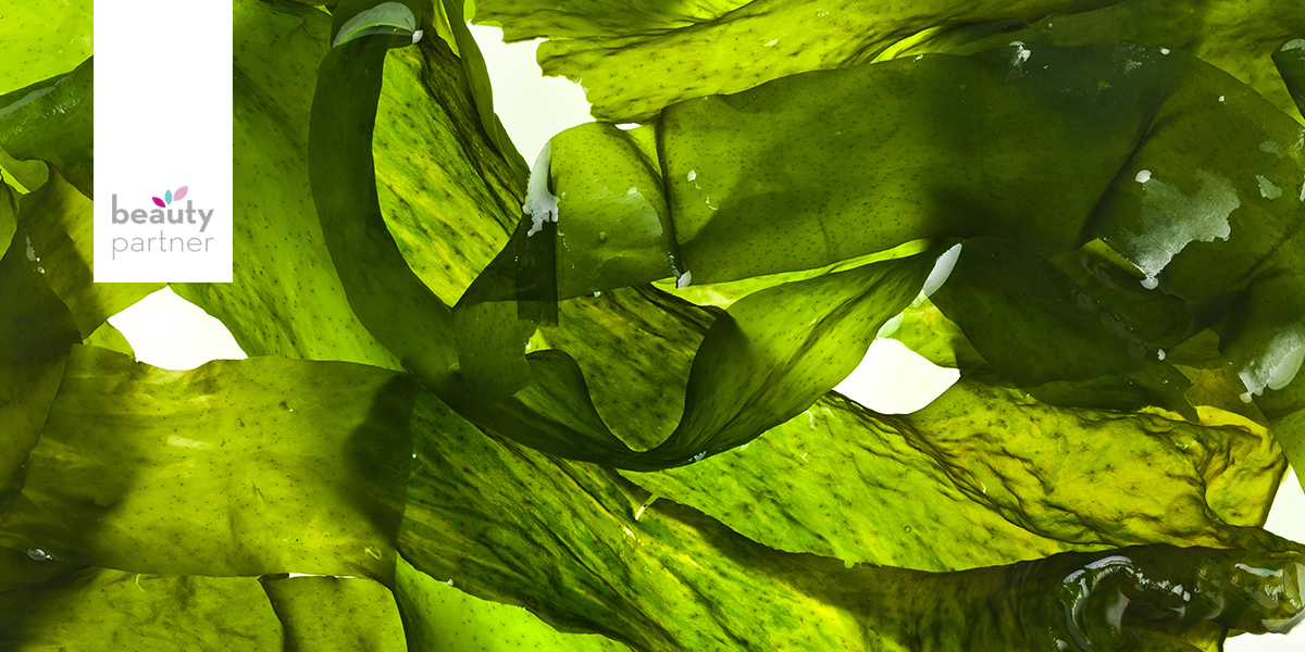 Algák, avagy tengeri ínyencségek arcra és testre – 1. rész
