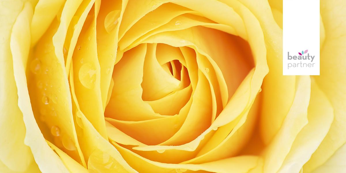 Rózsa kivonatok, esszenciális olajak és párlatok