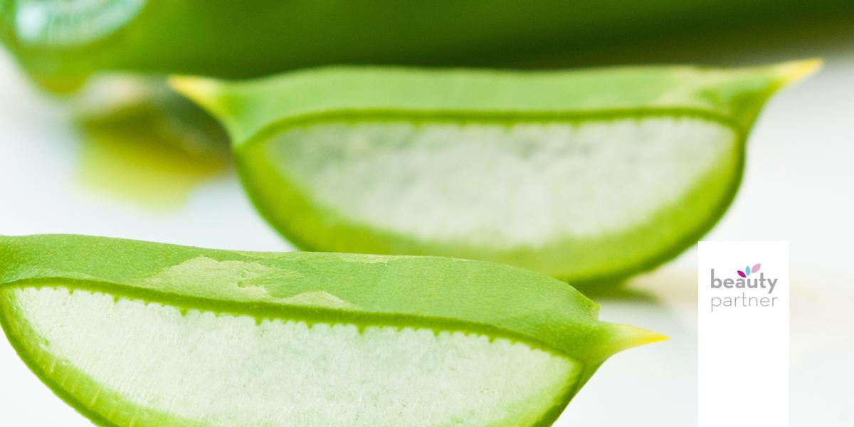 Az Aloe Vera felhasználásának 14 módja