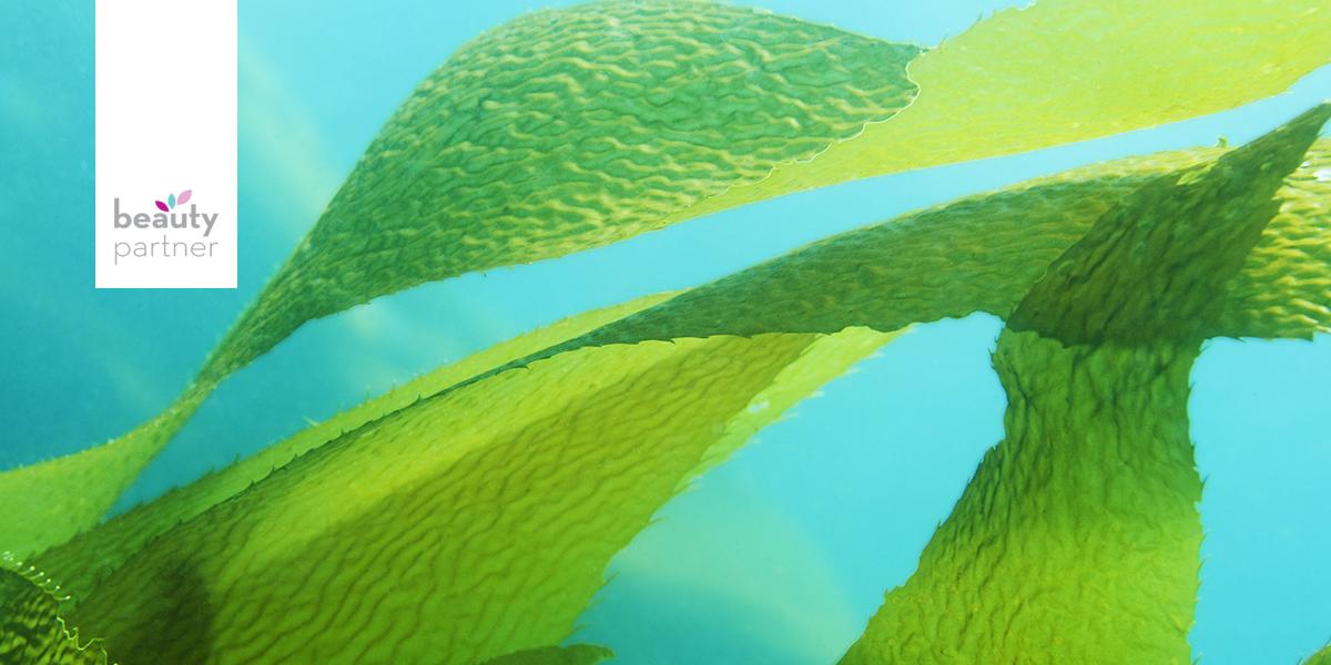 Algák, avagy tengeri ínyencségek arcra és testre – 2. rész